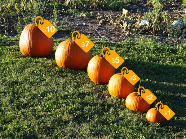 pumpkin sizing